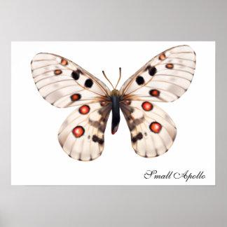 Borboleta pequena de Apollo Poster