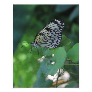 Borboleta preto e branco impressão de foto
