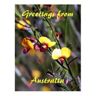 Boronia amarelo, cumprimentos de, Austrália Cartao Postal