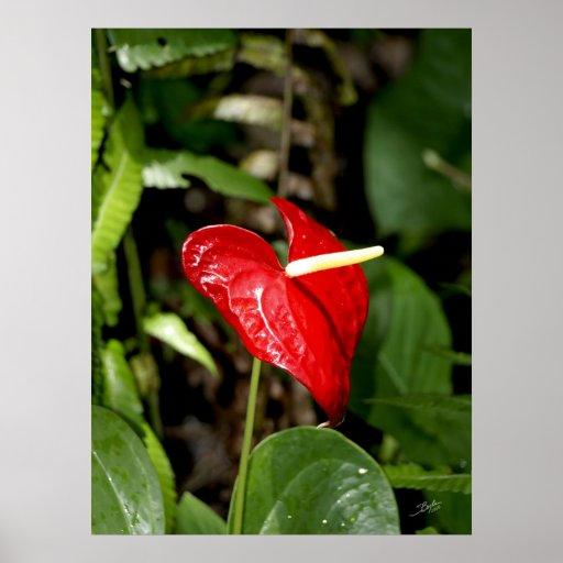 Botanicals 20 de Havaí Pôsteres