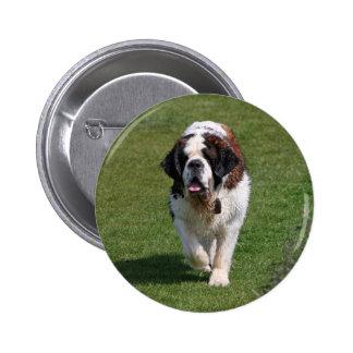 Botão bonito da foto do cão de St Bernard, pino Bóton Redondo 5.08cm