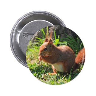 Botão bonito vermelho da foto do esquilo, pino bóton redondo 5.08cm