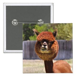 Botão engraçado da alpaca bóton quadrado 5.08cm