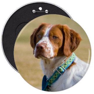 Botão redondo da foto bonita do cão de Brittany Bóton Redondo 15.24cm