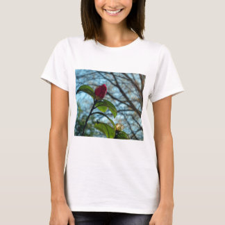 Botão T-shirts