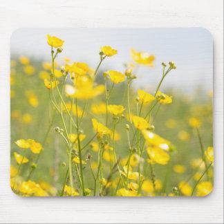 Botões de ouro de prado mouse pad
