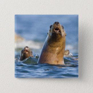 Bóton Quadrado 5.08cm Eumetopias estelar agressivo dos leões de mar