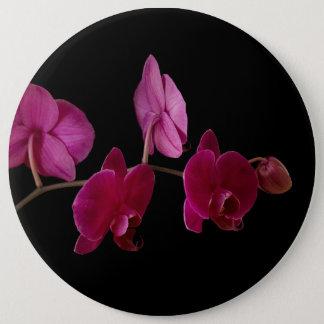 Bóton Redondo 15.24cm Orquídea cor-de-rosa do Dendrobium - flores