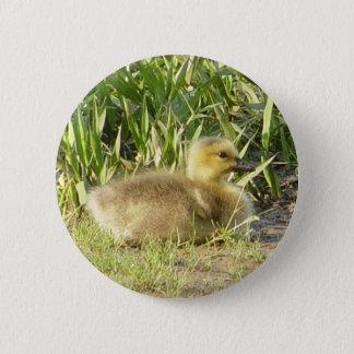 Bóton Redondo 5.08cm Botão de Gosling do ganso de Canadá do bebê