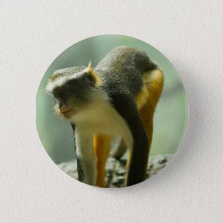 Bóton Redondo 5.08cm Macaco