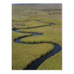 Botswana, África. Rio de Okavango da opinião de Ar Cartões Postais