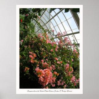 Bougainvillea no jardim botânico dos Estados Unido Poster