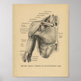 Braço do ombro do impressão da anatomia do alemão