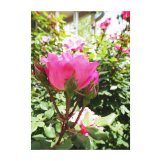 brilhante, cor-de-rosa, flores, florais, fotografi impressão em tela