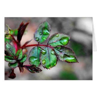 Brotar aumentou as folhas com gotas de água cartão