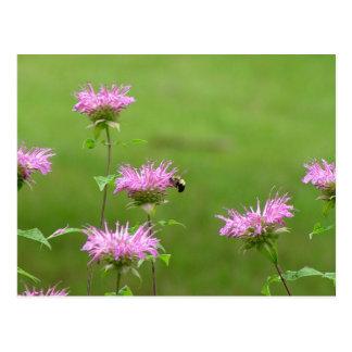 Bumble a abelha no cartão da flor do bálsamo de ab cartão postal