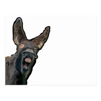 burro cartão postal