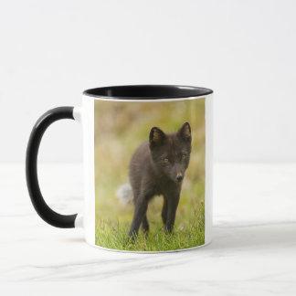 Buscas da raposa ártica para a comida caneca