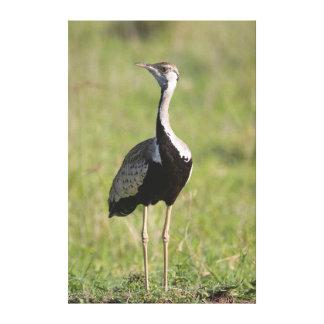 Bustard Preto-Inchado, conservação 2 de Ngorongoro Impressão Em Tela