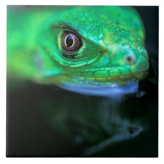 CA, Panamá, ilha de Barro Colorado, verde do bebê Azulejo Quadrado Grande