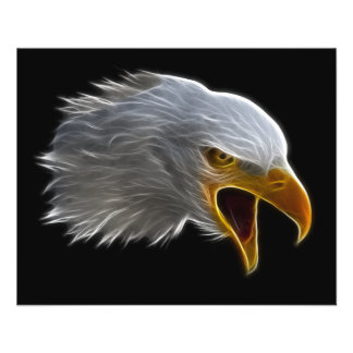 Cabeça americana gritando da águia americana flyer 11.43 x 14.22cm