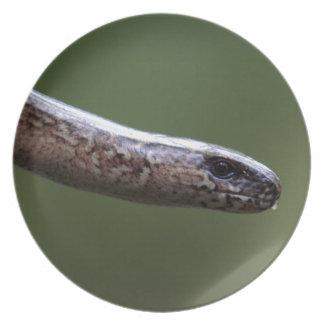 Cabeça de um Slowworm, Anguis fragilis Prato De Festa