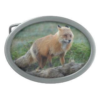 Caçando a foto 2 dos animais selvagens do Fox