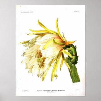 Cacto botânico do vintage poster
