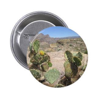 Cacto espinhoso de Vista do monte da angra dos Bóton Redondo 5.08cm