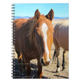 Caderno do cavalo