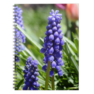 Caderno do Muscari (jacinto de uva)
