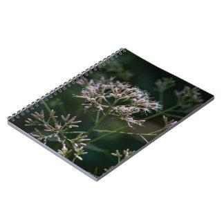 Caderno floral do Wildflower roxo da erva daninha