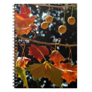 Caderno/jornal pessoal - sicômoro e queda cadernos