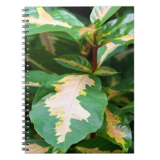 Caderno - planta de caricatura de Tricolored
