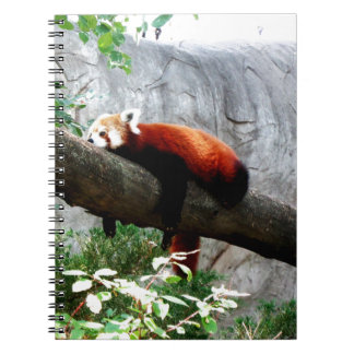 Cadernos engraçado preguiçoso animal adorável da panda