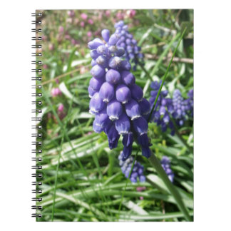 Cadernos Espirais Muscari roxo da flor do jacinto de uva