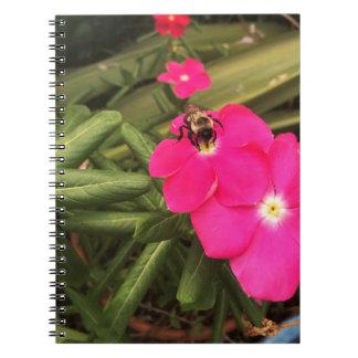Cadernos Espiral abelha