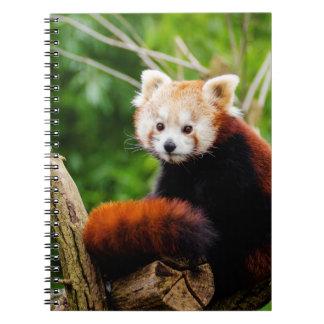 Cadernos Espiral Urso de panda vermelha bonito