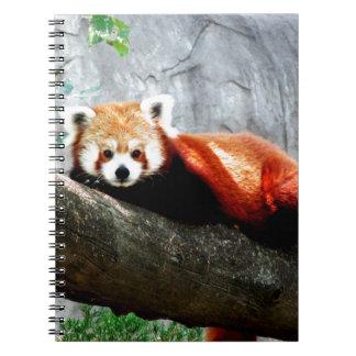 Cadernos panda vermelha animal engraçada bonito