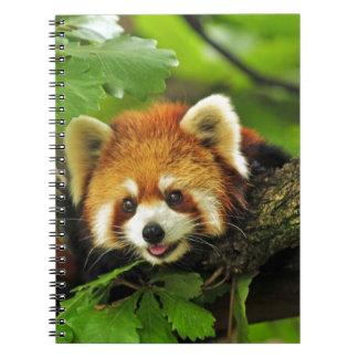 Cadernos Panda vermelha Cub