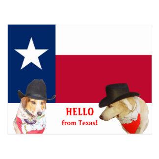 Cães bonitos olá! de Texas! Cartoes Postais