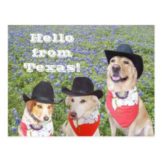 Cães de Texas nos Bluebonnets Cartoes Postais