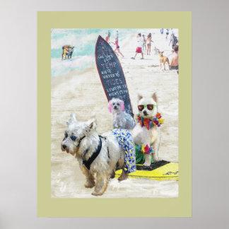 cães do surf pôster