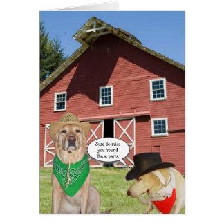 Cães engraçados customizáveis nós senhorita Você Cartão Comemorativo