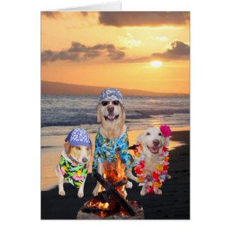 Cães engraçados na praia no por do sol cartao