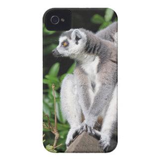 Caixa corajosa anel-atada Lemur da amora-preta Capinha iPhone 4