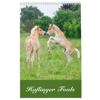 Calendário Haflinger Foals 2017