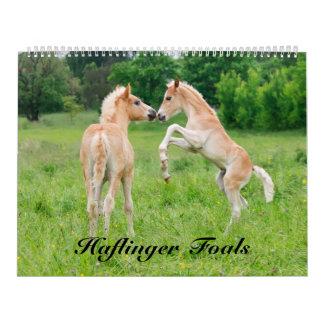 Calendário Haflinger Foals o tamanho 2017 grande