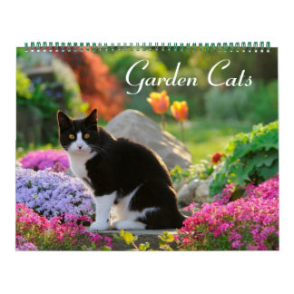 Calendário Tamanho dos gatos 2017 do jardim grande