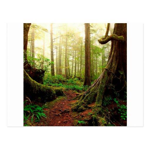 Caminhada da árvore das raizes cartoes postais